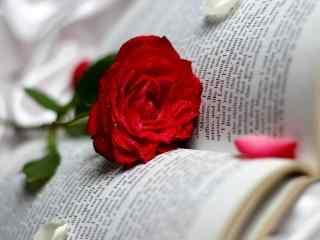 玫瑰小清新摄影壁