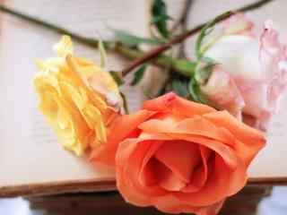 创意玫瑰摄影桌面