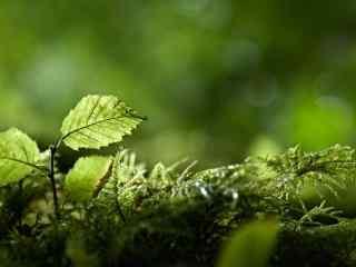 唯美绿色植物清新