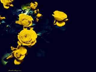 玫瑰超漂亮唯美图