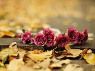 玫瑰典雅桌面