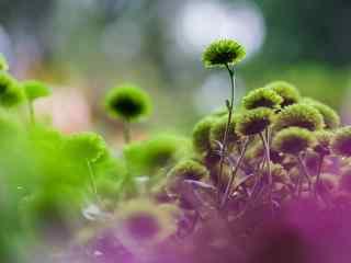 可爱的绿色植物桌