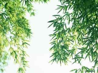 清新绿色竹叶高清