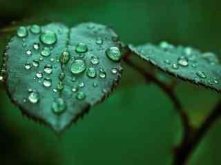 唯美的绿色叶子高