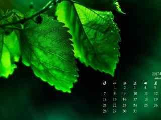 2017年5月绿色叶子高清日历壁纸