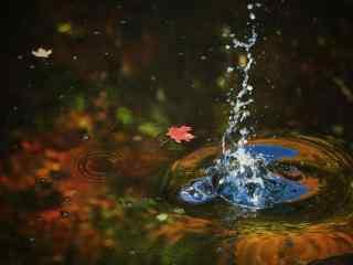 唯美好看水中漂浮