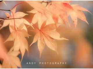 秋日里唯美好看的
