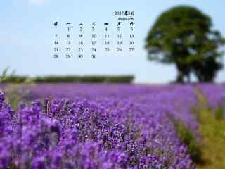 2017年5月薰衣草唯美花海日历壁纸
