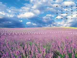 2017年5月小清新薰衣草花海日历壁纸