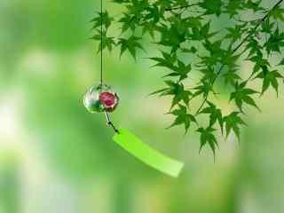 护眼夏日绿色枫叶