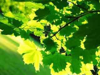 绿色护眼夏日绿色