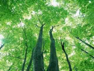 清新好看的绿色树
