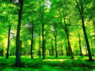 郁郁葱葱的绿色护