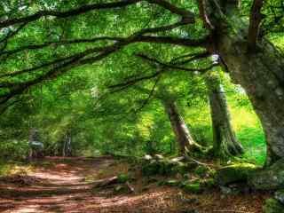 清新绿色护眼树林