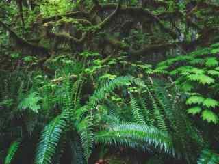 绿色护眼热带树林