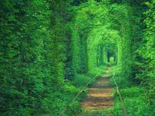 仙境树林中的轨道