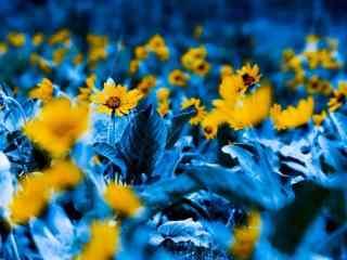 蓝色日系小雏菊桌