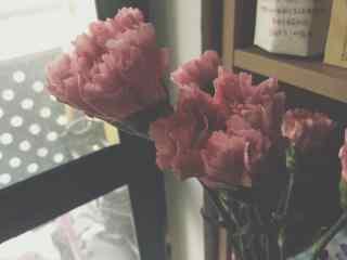唯美康乃馨花束桌面壁纸