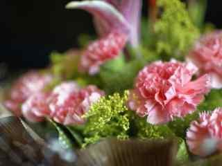 好看的粉色康乃馨花束桌面壁纸