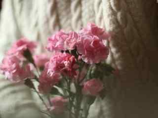 美女手捧康乃馨鲜花桌面壁纸