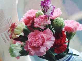 小清新好看的康乃馨花束桌面壁纸