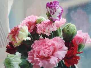 各式各样的康乃馨花束桌面壁纸