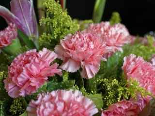 清新粉色康乃馨花束桌面壁纸
