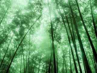 绿油油的蜀南竹海竹林桌面壁纸