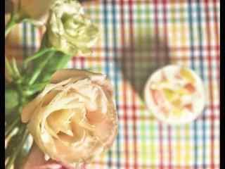 唯美粉白色桔梗花桌面壁纸