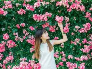 蔷薇花墙中的美女桌面壁纸