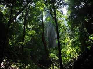 清新森林风景高清桌面壁纸