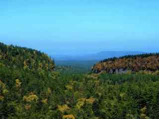 蔚蓝天空下的森林风景壁纸