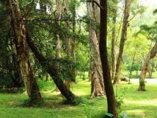 小清新森林风景桌面壁纸