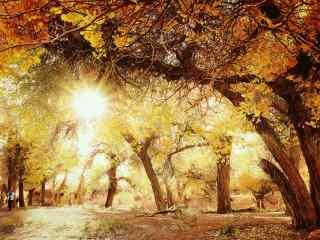 唯美的森林风景高清桌面壁纸