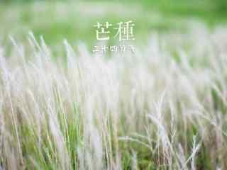 芒种节气之草地桌面壁纸