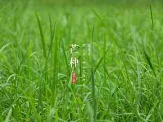 芒种节气之清新草地桌面壁纸