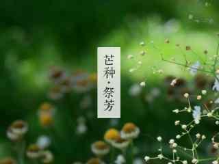 芒种节气之清新植物桌面壁纸