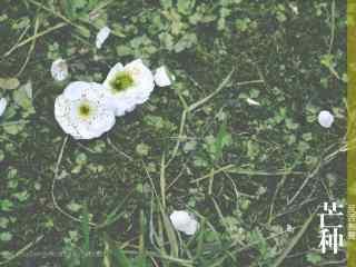 芒种节气之文艺植物桌面壁纸