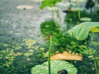 绿色清新荷塘风景壁纸