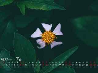 2017年7月日历小清新鲜花图片壁纸