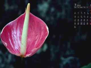 2017年7月日历鲜花植物图片壁纸