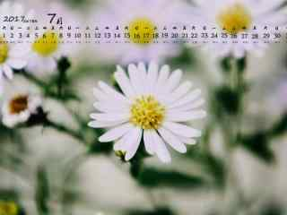 2017年7月日历唯美的小雏菊壁纸