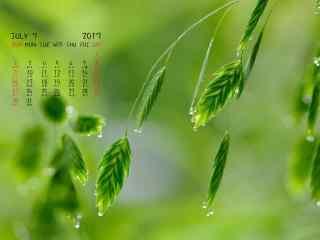 2017年7月日历绿色植物图片壁纸