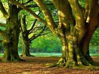 阳光下的大树桌面壁纸