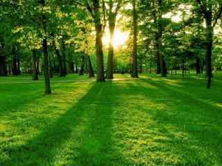 阳光下的绿色草地壁纸