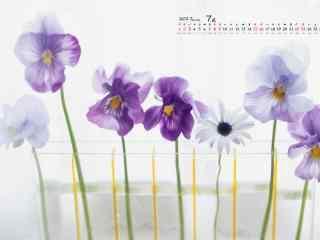 2017年7月日历唯美花朵桌面壁纸