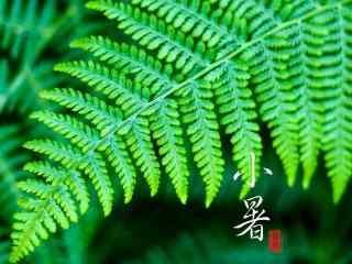 2017年小暑绿色植物护眼壁纸