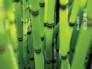 2017年小暑绿色竹林护眼壁纸