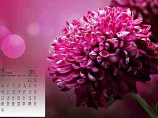 2017年7月日历美丽的鲜花图片壁纸