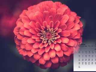 2017年7月日历鲜花桌面图片壁纸
